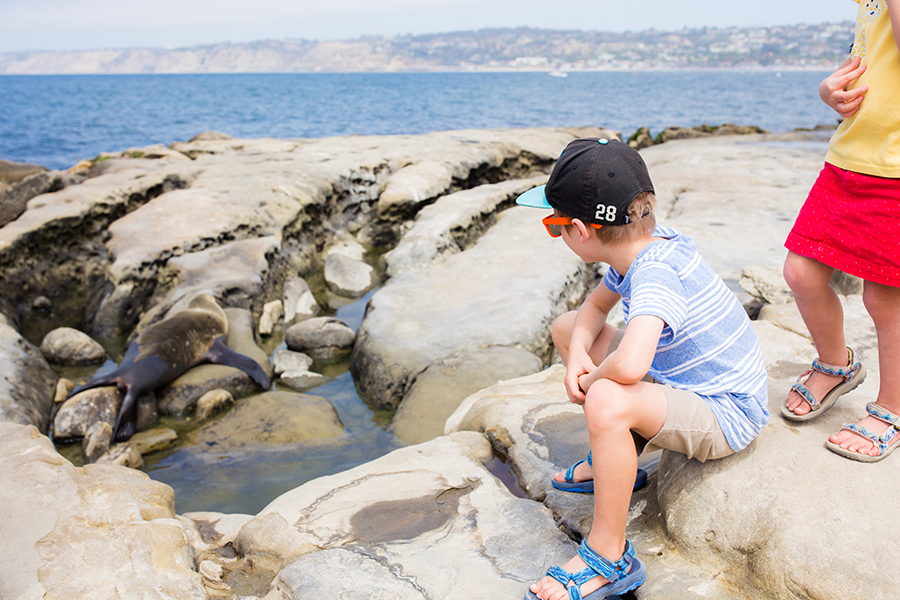 San Diego Sea Lions Kids Travel